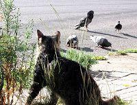 gatos-y-palomos