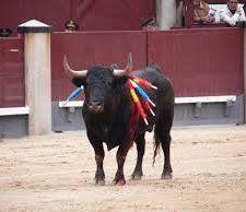 denuncia-toros