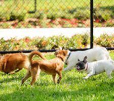denuncia-parque-perros