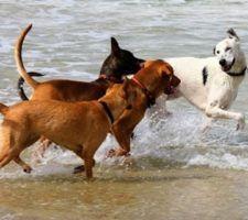 denuncia-perros