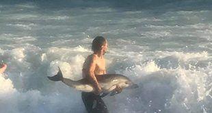 infonerja-delfin