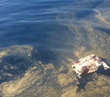 Estado del agua en nuestras playas: ¿delito medioambiental?