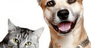 infonerja-mascotas