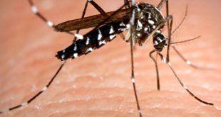 infonerja-mosquito