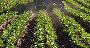 infonerja-campus-agrario