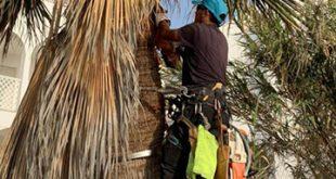 infonerja-palmeras